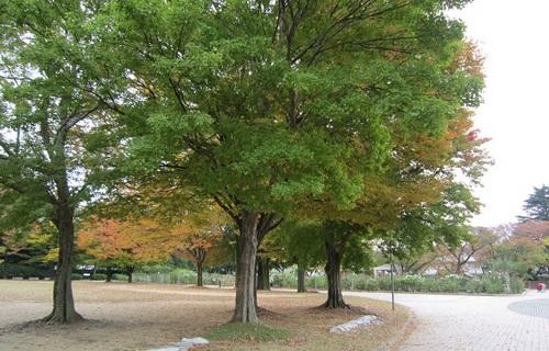 IMG_20141031-001バラ園♪.jpg