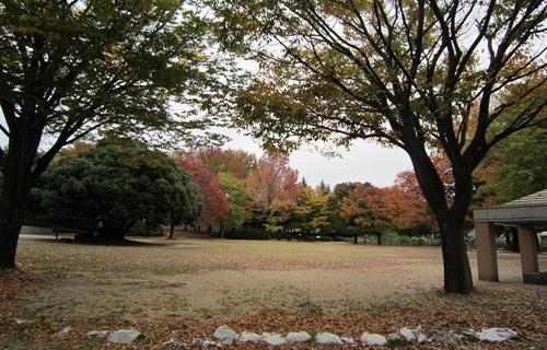 IMG_20141031-002バラ園♪.jpg