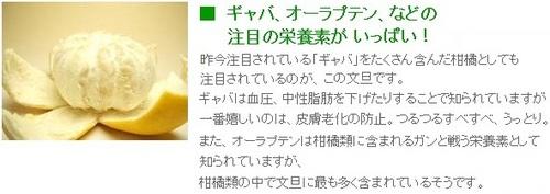 ss20130307-003土佐文旦♪.jpg